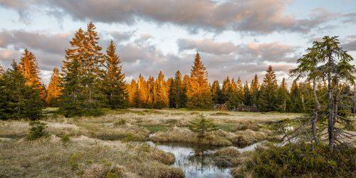 Wild at heart – tiefe Einblicke in den Bayerischen Wald